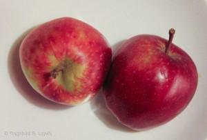 Norske epler, uvisst hvilken art.